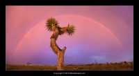 Thunderstorm Rainbow Sunset in Mojave